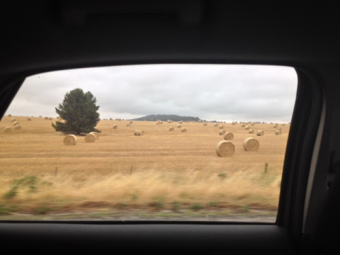 Adelaide wheat field